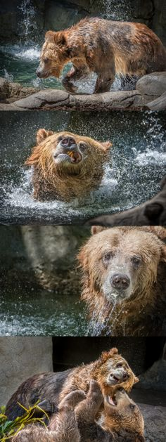 A Grizzly Scene by Helene Hoffman