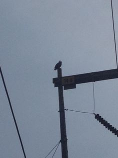 Eagle outside of Costco