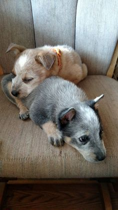 tuckered out pals