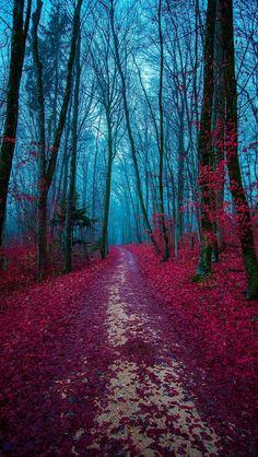 The enchanting forest  source Flickr.com