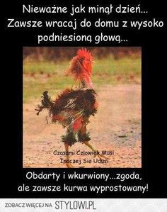 Stylowa kolekcja inspiracji z kategorii Humor New Year Wishes Funny, New Year Jokes, New Year Quotes Funny Hilarious, Happy New Year Funny, New Year Wishes Messages, New Year Wishes Quotes, Happy New Year Images, Quotes About New Year, Funny Messages