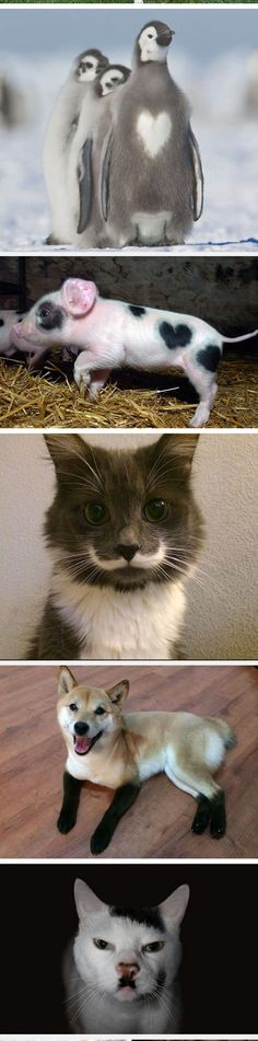 Animals With Unusual Fur Markings: