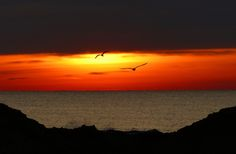 Photo Birds on Fire - Sunrise at the Jersey Shore by Kevin Reynolds on 500px