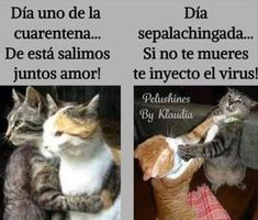 Funny Animal Memes, Funny Cats, Funny Animals, Funny Memes, Jokes, Funny Spanish Memes, Spanish Humor, Book Memes, Art Memes