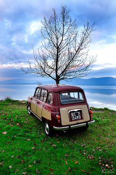 1967 Renault 4 Parisienne. The tree growing from it was an optional extra at the time