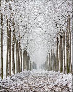 ✯ Frozen Trees