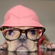 Talk nerdy to me , sweet French Bulldog