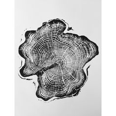 LintonArt Alaskan Cypress Tongass National Forest by Erik Linton Graphic Art Tongass National Forest, Ketchikan Alaska, Woodcut Art, Art Watercolor, Forest Painting, Tree Rings, Cypress Trees, Gravure, Art Inspo