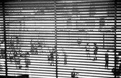 """""""Macao"""", Milano.  3° riscatto urbano di PFM. Saranno conteggiati i """"mi piace"""" al seguente post: https://www.facebook.com/premiatafotograferiamhhhhh/photos/o.170517139668080/924994327521121/?type=3&theater"""