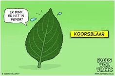 Koorsblaar