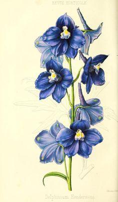 ser. 4:t.3 (1854) - Revue horticole. - Biodiversity Heritage Library