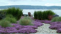 Charming Garden Design with Zen Landscaping: Awesome Zen Landscaping Design With Adirondack Chairs And Dry River Bed With Grasses And Gravel Path Plus Mass Planting And Beautiful Purple Flowers With Water Front ~ franklester.com Exterior Design Inspiration