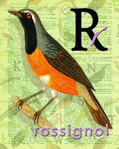 R for ROSSIGNOL.Nightingale Decor Buffon par BerniesArtPrints