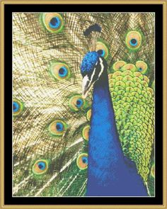 Download the OtherCross-Stitch Crafting | PEACOCK - CROSS STITCH DOWNLOAD