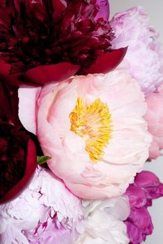 Peonies in every color.  <3