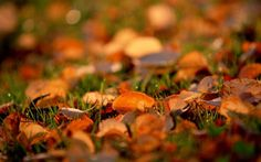 Autumn Leaves Retina MacBook Pro Wallpaper