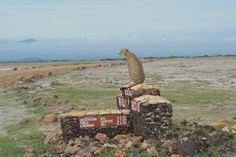 Keeping an eye at the comings and goings at camp! #Amboseli #trafficwarden