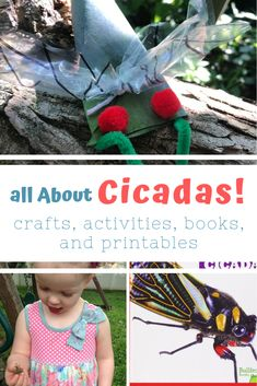I know it is summer when I hear the cicadas singing. The live-wire hum reminds me of hot, still afternoons, half-melted flavor-ice pops, and the smell of suntan lotion and river water. Preschool Science, Preschool Lessons, Science For Kids, Preschool Activities, Preschool Music, Nature Activities, Science Ideas, Red Pom Poms, Toddler Classroom