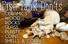 How to Decorate Your Fish Tank: Dos and Don'ts - Fresh water fish tank Tropical Freshwater Fish, Tropical Fish Aquarium, Tropical Fish Tanks, Freshwater Aquarium Fish, Aquarium Fish Tank, Diy Aquarium, Aquarium Ideas, Fish Tank Decor, Aquarium Setup