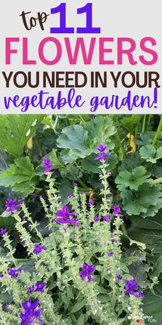 Adding flowers to your vegetable garden has a lot of perks. They make great companion plants for your crops and bring in pollinators and beneficial insects. Not sure what to plant? Here are 11 flowers for your vegetable garden to try! Vegetable Garden For Beginners, Gardening For Beginners, Gardening Tips, Vegetable Gardening, Organic Vegetables, Growing Vegetables, Vegetables Garden, Growing Flowers, Planting Flowers