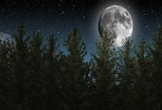 Free Image on Pixabay - Moon, Night Sky, Stars, Trees Night Sky Moon, Night Sky Stars, Night Skies, Astronomy Stars, Space And Astronomy, Interesting Science Facts, Fun Facts, Sky Images, Free Images