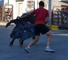 Santacara: Vacas Hermanos Marcen (10) Backpacks, Cows, Siblings, Fiestas, Backpack, Backpacker, Backpacking