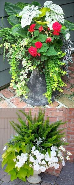 Showy, colorful and easy care shade plants and container gardens with vibrant foliage and flowers. 30 designer plant lists to create gorgeous gardens with shade loving plants ! – A Piece Of Rainbow Showy, colorful and easy care Shade Plants Container, Container Flowers, Container Gardening, Plants For Containers, Succulent Containers, Diy Garden, Garden Planters, Shade Garden, Fern Planters