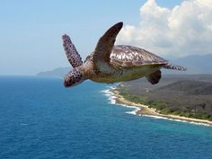 Flying Turtle Cast Concrete