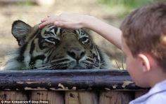 No, he's  not really petting the kitty! Ilusiones ópticas. Más lejos de lo que parece.