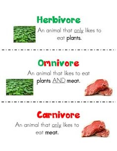 FREE Herbivore, Omnivore, Carnivore Poster