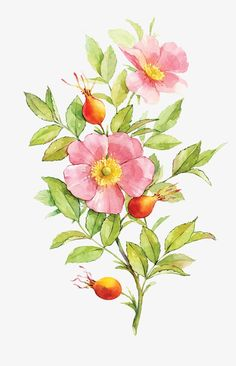 Best Screen wild rose drawing Ideas In this lesson, we'll examine precisely how to draw a increased having pastels. We have been making use of pastels an Watercolor Cards, Watercolor Flowers, Watercolor Paintings, Illustration Blume, Watercolor Illustration, Flower Images, Flower Pictures, Botanical Drawings, Botanical Prints