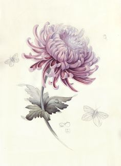Chrysanthemum watercolour sketch by Elena Limkina