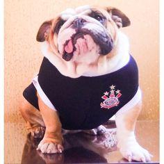 """Polly, recém adotada por @angelmmo já chegou campeã #corinthias #englishbulldoglovers #uauhbulldogs #doglovers #bullyrescued #bulldogrescue #bulldogs"" Photo taken by @uauhdogclothes on Instagram, pinned via the InstaPin iOS App! http://www.instapinapp.com (01/25/2015)"