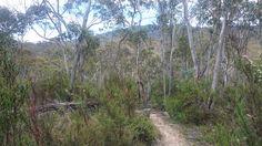 Namadgi National Park - Path into Rendezvous Creek