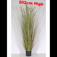Artificial Plant Dogstail Grass  With Pot Planter Indoor Outdoor Decor 202 Cm Uk