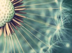 This up close shot of a dandelion by Ilse Noordhof offers a new perspective of the plant.