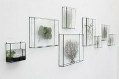 Terrarium 1012 Terra from Spazio Materiae in Naples www.spaziomateria … - All For Herbs And Plants Air Plant Display, Deco Nature, Deco Floral, Display Boxes, Air Plants, Potted Plants, Green Life, Interior And Exterior, Planting Flowers