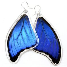 Real blue morpho butterfly earrings: very large, super owl eyes ($49) ❤ liked on Polyvore