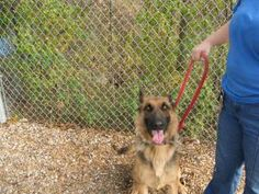 134-136 is an adoptable German Shepherd Dog Dog in Flint, MI. Adoption fees for dogs at Genesee County Animal Control are:Mix breed puppies under 4 months $65.00. Pure breed puppies under 4 months $75...