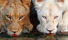 decouvrez-les-curiosites-du-regne-animal-avec-37-somptueux-animaux-albinos-une