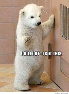 I want a polar bear