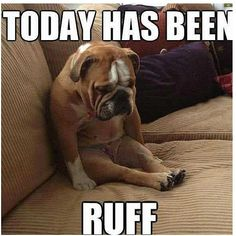Are you looking for a cute and funny bulldog meme? These 20 cute bulldog memes will surely elicit aww's and make you want to adopt one. Funny Dog Memes, Funny Shit, Funny Dogs, Cute Dogs, Funny Animals, Funny Quotes, Cute Animals, Dog Quotes, Animal Memes