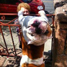 Hello! Happy #Bulldog