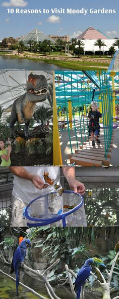 Visiting Galveston? 10 reasons your family needs to head to Moody Gardens. So, so much to see and do. (hosted)
