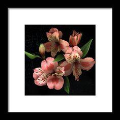 Freesia Flowers, Clear Acrylic, Fine Art America, Framed Prints, Artwork, Poster, Image, Work Of Art, Auguste Rodin Artwork