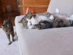 Maru:[Oh no! I cannot eat!] 4-4 私信