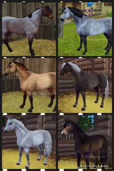 all Connemaras in star stable! Star Stable Horses, Horse Star, Beautiful Horses, Animals Beautiful, Star Citizen, Animals And Pets, Cute Animals, Drawing Stars, Horse Games