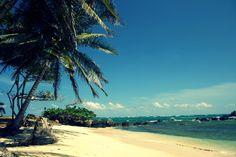 Weiße Sandstrände, üppige, tropische Vegetation mit den verschiedensten Früchten und natürlich ein türkis-blaues Meer, Hängemattenfeeling und Hula Stimmung… so findet man das karibische Paradies de...