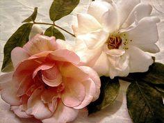 CJ Anderson - Passion and Love