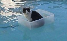 Just a cat, floating in a plastic box, in a swimming pool.